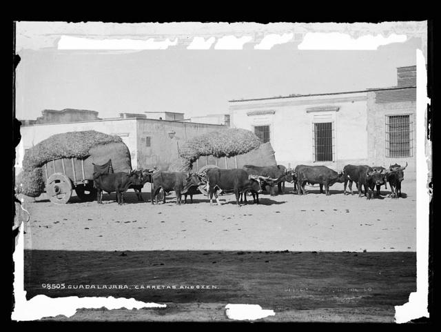 Guadalajara, carretas and oxen