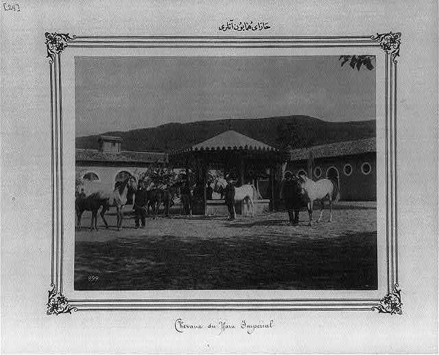 [Horses of the Imperial Stud Farm]