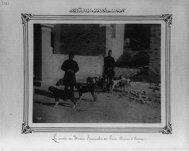 [Hunting dogs at the Imperial Farms at Kağıthane]