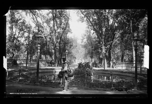 In the Almeda [i.e Alameda], City of Mexico