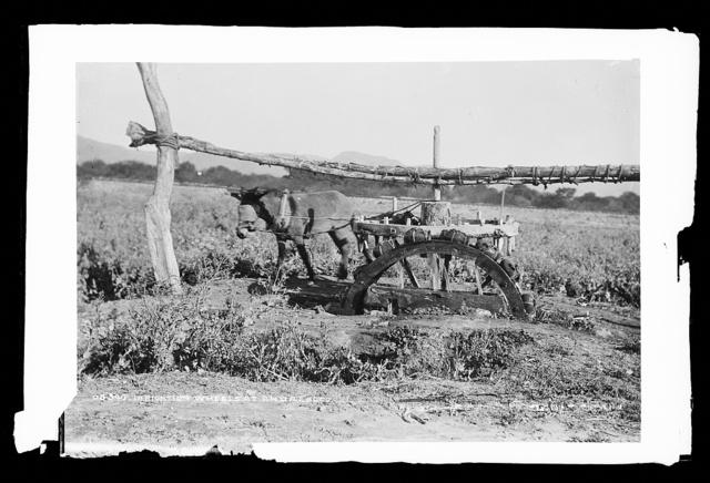 Irrigation wheels at Ahualalco [sic]