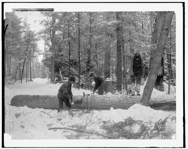 Logging, cutting lengths