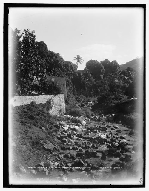 On the road to the Botanical Gardens, Martinique, W.I.