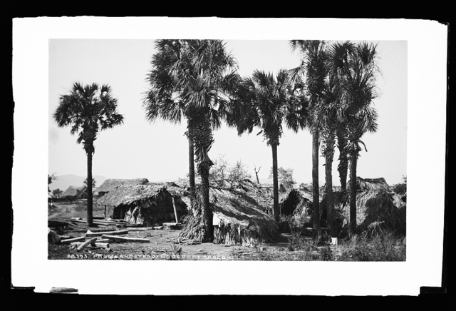 Palms and straw houses at Rascon