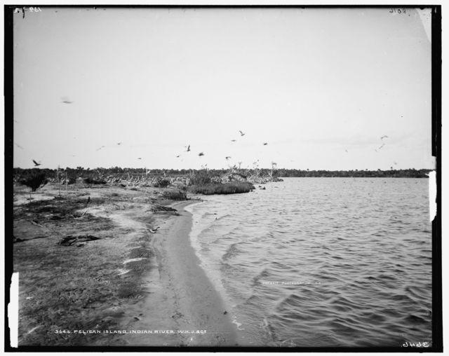 Pelican Island, Indian River