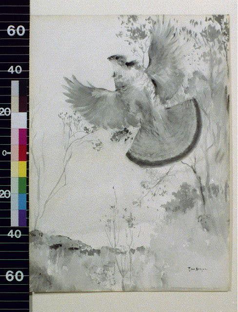 [Pheasant flying against trees]