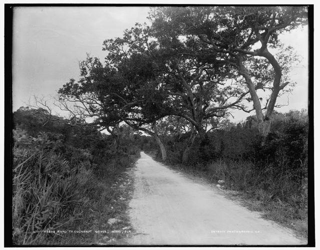Road to Cocoanut Grove [i.e. Coconut Grove], Miami, Fla.