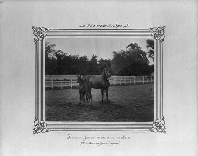 [Samsun: The Arabian mare and her foal in the third section of the Imperial Stud Farm] / Constantinople, Abdullah Frères.