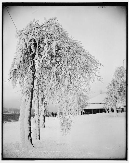 Snow studies, Prospect Park, Niagara