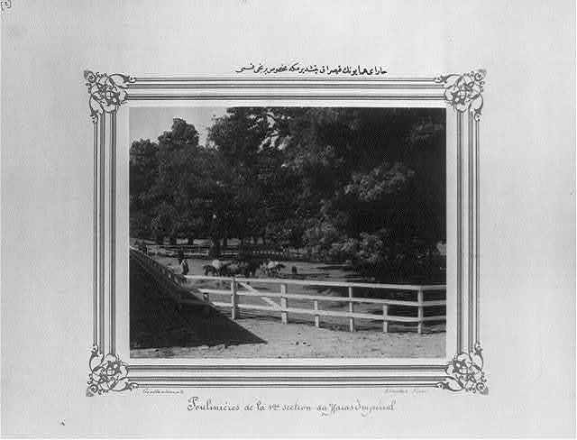 [The first section of the Imperial Stud Farm designated for breeding of mares] / Constantinople, Abdullah Frères.