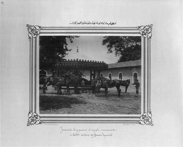 [The Hungarian and Normandy mares of the third section of the Imperial Stud Farm] / Constantinople, Abdullah Frères.