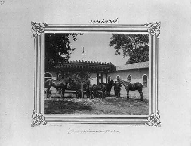 [The mares and foals of the second section] / Constantinople, Abdullah Frères.