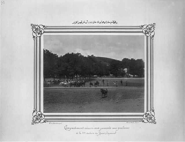 [The mares separated from their foals in the first section of the Imperial Stud Farm] / Constantinople, Abdullah Frères.