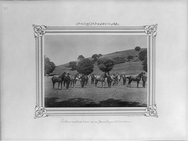 [The three year old foals born in the first section of the Imperial Stud Farm] / Constantinople, Abdullah Frères.