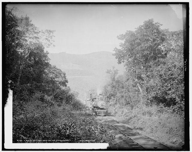 Train in Cafetal of Temasopa [sic]