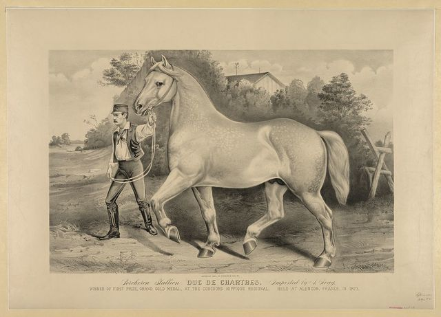 Percheron stallion Duc de Chartres, imported by A. Rogy: winner of first prize, grand gold medal, at the Concours Hippique Regional; held at Alencon, France, in 1873