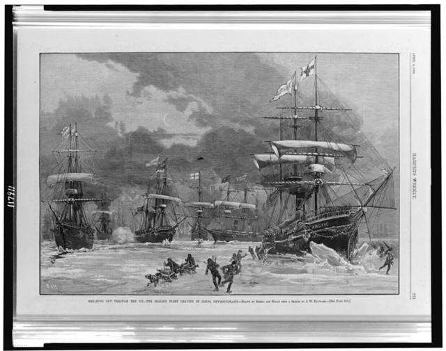 Breaking out through the ice - the sealing fleet leaving St. Johns, Newfoundland / drawn by Schell and Hogan from a sketch by J.W. Hayward.