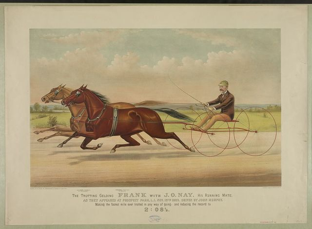 The trotting gelding Frank with J.O. Nay, his running mate: as they appeared at Prospect Park, L.I. Nov. 15th, 1883, driven by John Murphy