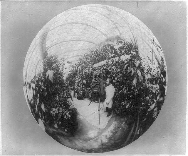 [A.K. Kuznetsov, standing inside greenhouse with a tripod-mounted camera, as seen through his reflected image in a mirrored sphere]
