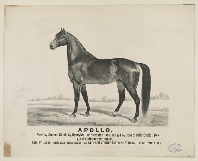 Apollo: sired by Seneca Chief, by Rysdyk's Hambletonian; dam and G.D. by Sons of Hill's Black Hawk, G.G.D. a messenger mare