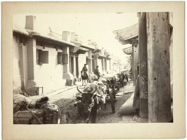 [Cattle pulling carts on a street in an unidentified location, probably in Maimachin, Mongolia]