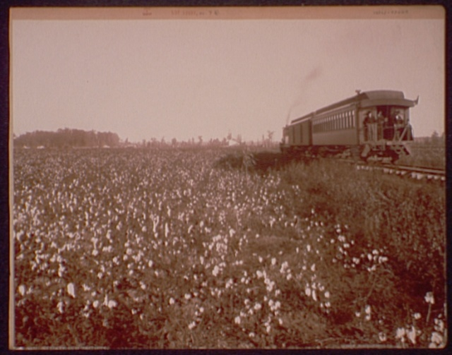 Cotton Fields at Swiftwater