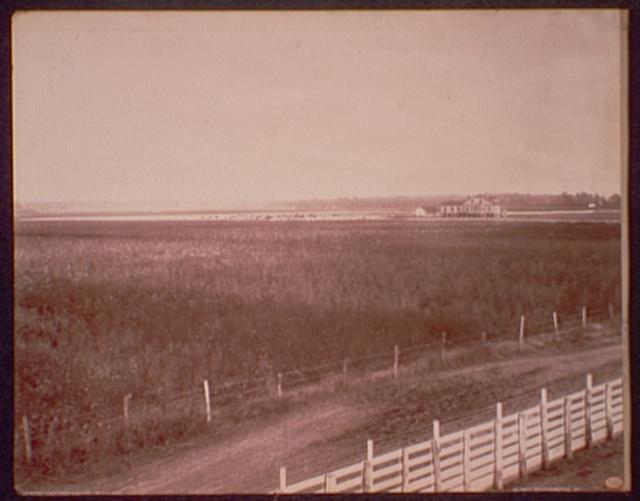 Cotton fields, Richland
