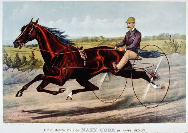 The champion Stallion Maxy Cobb by Happy Medium