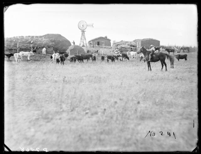 Custer County, Nebraska.