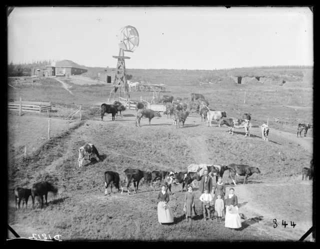 Damon Livestock, Sargent, Custer County, Nebraska