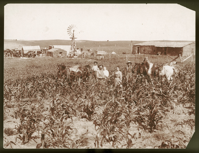 Family standing in cornfield in front of their farm buildings and sod house.