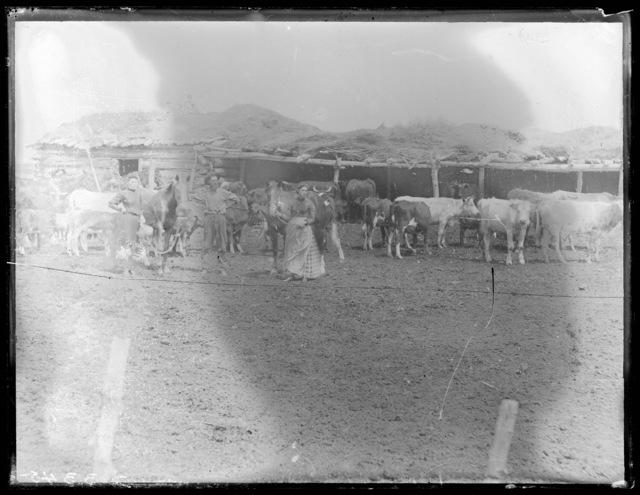 Family with livestock near New Helena, Custer County, Nebraska.