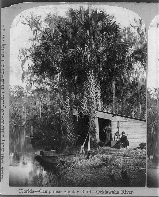 Florida - Camp near Sunday Bluff - Ocklawaha River