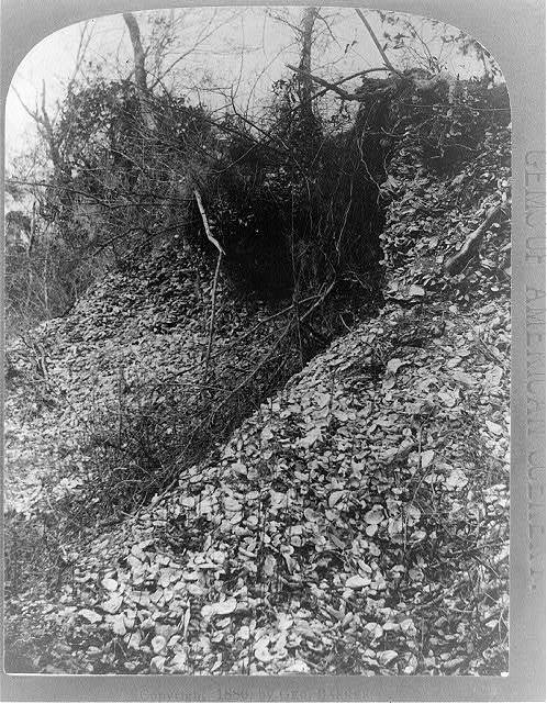 Florida-- the shell mounds--Ft. George Id. / Geo. Barker, photographer, Niagara Falls, N.Y.