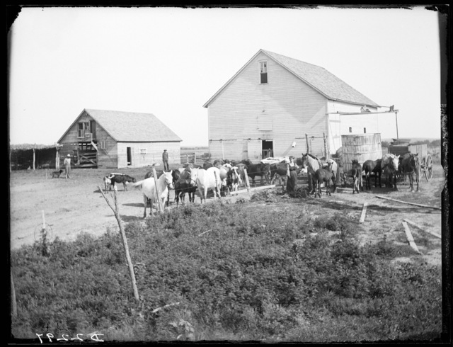 George W. Heaselgrave, Amherst, Buffalo County, Nebraska