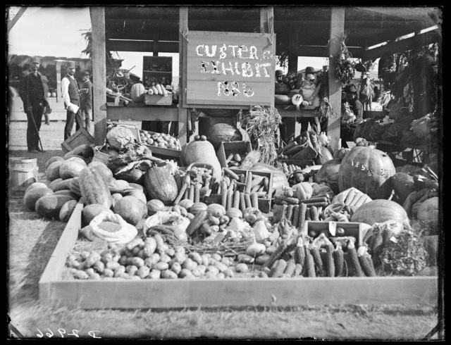 Vegetable exhibit at Custer County fair, Broken Bow, Nebraska