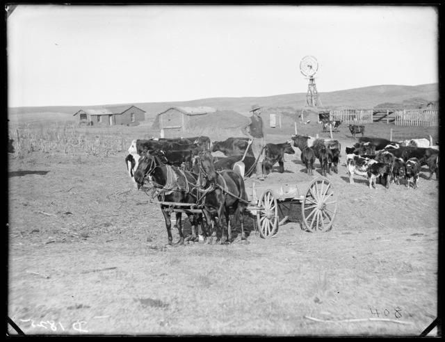 Anthony (Anthoney), Custer County, Nebraska