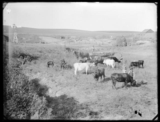 Cattle ranch in Custer County, Nebraska.