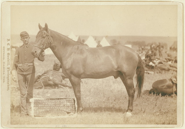 """""""Comanche,"""" the only survivor of the Custer Massacre, 1876. History of the horse and regimental orders of the [7]th Cavalry as to the care of """"Comanche"""" as long as he shall live"""