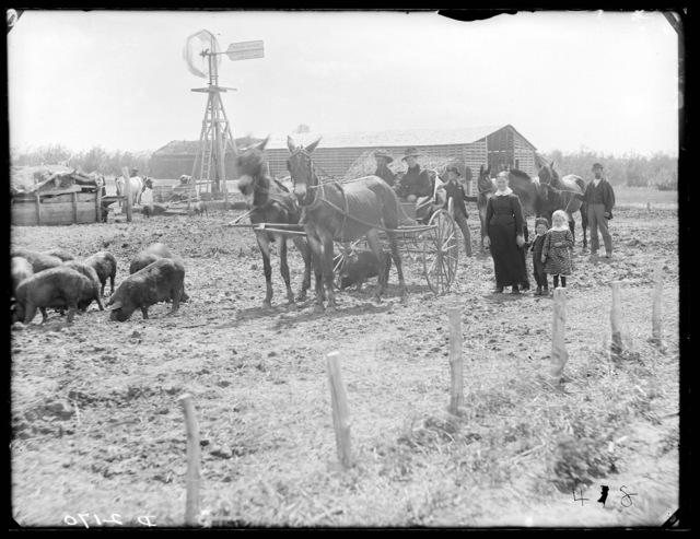 Farm scene near Swanson, north Custer County, Nebraska.