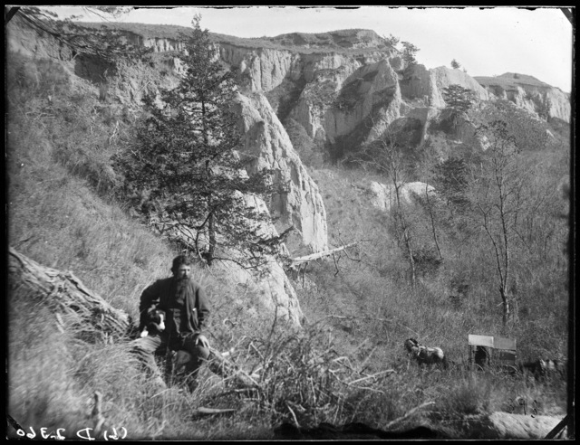 Harvey Andrews in Cedar Canyon on Victoria Creek, where he made a small fortune selling cedar fence posts and pine logs to settlers.