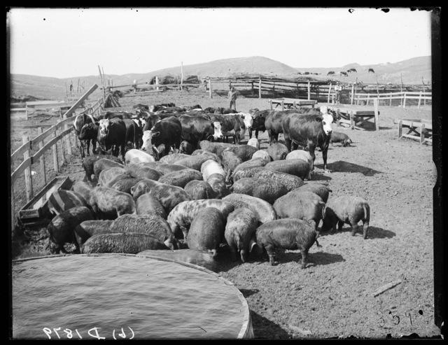 J.H. Ullom ranch, Milburn, Nebraska