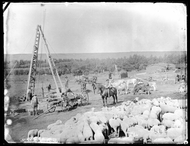 Mr. Boggs' Sheep Ranch, Boggs Table, Nebraska.