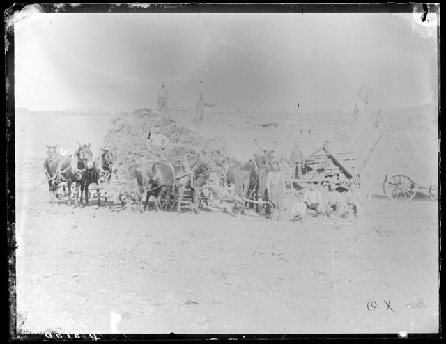 Threshing crew shown using horse and mule power in threshing alfalfa, Custer County, Nebraska.
