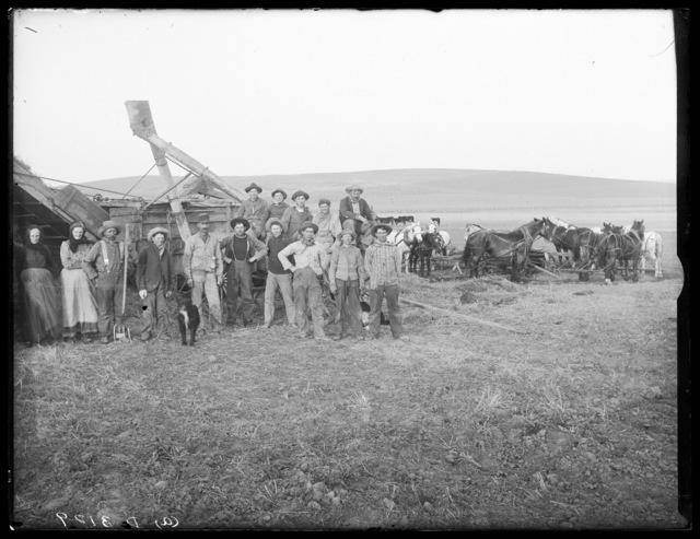 Threshing crew shown using horse power to thresh wheat, Custer County, Nebraska