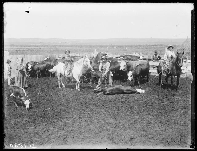 Branding scene on the Cal Snyder Ranch near the Middle Loup River at Milburn, Nebraska.