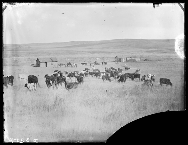 Family members and cattle on a ranch in the Ortello Valley, Custer County, Nebraska.