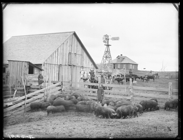 Farm of W.W. Potts, Cat Creek, Custer County, Nebraska.