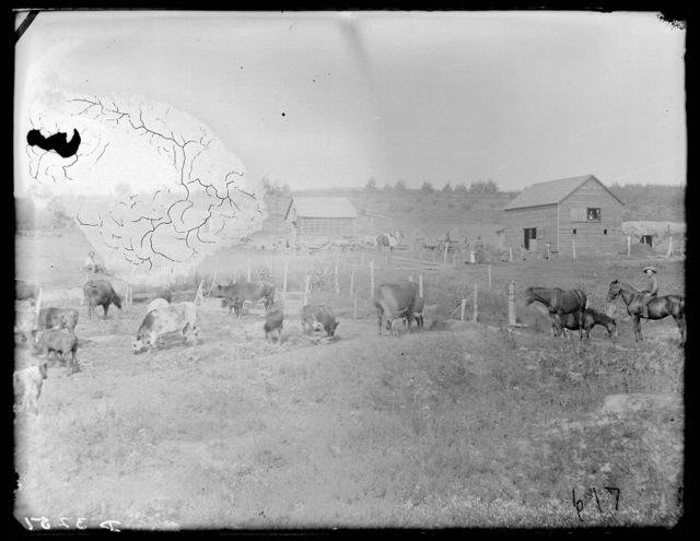 Farm scene in eastern  Custer County, Nebraska.