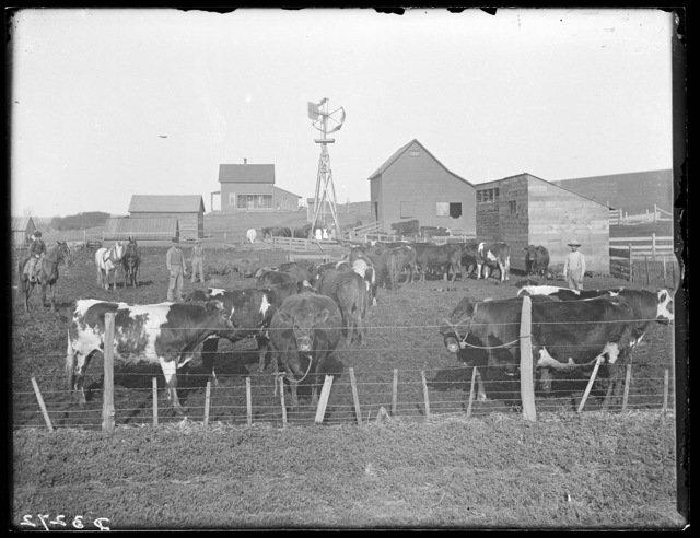 Farm scene near Ansley, Custer County, Nebraska